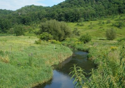 Spring Creeks in the Driftless Area